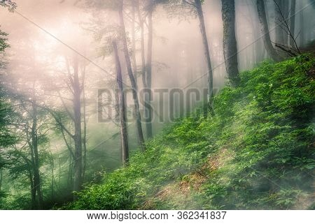 Mystical Forest On A Mountainside In Heavy Fog. Forest Atmosphere With Dense Fog. A Footpath Through