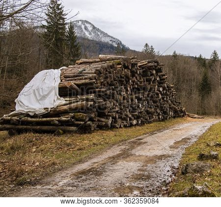 Deforestation Wood Pile Ecological Problem Human Corruption About Nature Concept Picture From Europe