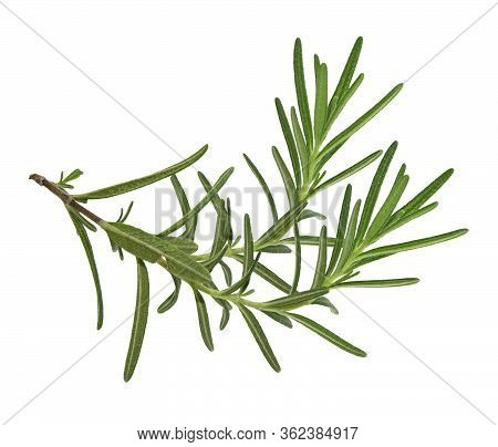 Rosemary Isolated On White Background, Top View With Clipping Path.