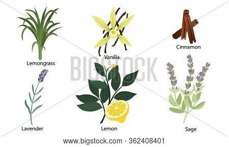 Set Of Different Natural Herbs, Flowers, Fruits. Lemon, Vanilla, Lavender, Lemongrass, Cinnamon, Sag