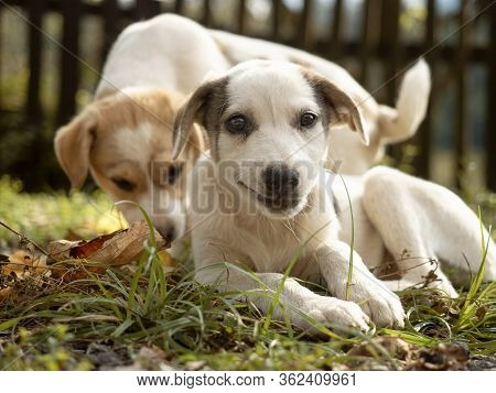 Smiling Puppy On The Grass Looking At The Camera