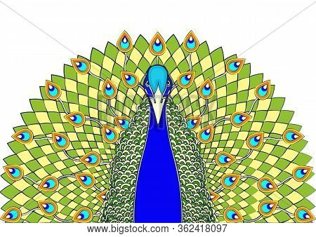 Peacock With Flowing Tail Colorful Cartoon Drawing, Print, Front View. Beautiful Blue Green Bird Wit