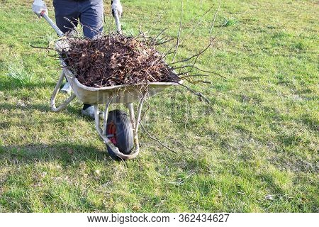 Man In Gloved Hands Carrying Dry Leaves And Branches In Old Metal Wheelbarrow On Green Grass Field B