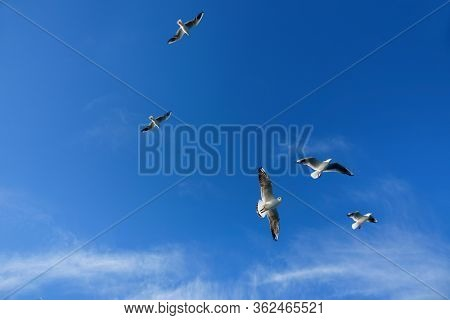 Close up seagulls flying over blue sunny sky