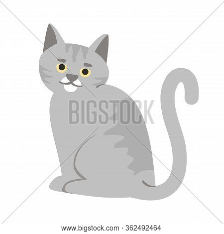 Adorable Gray Cat Semi Flat Rgb Color Vector Illustration. Smiling Grey Kitten, Cute Domestic Animal