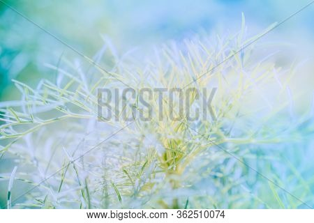 Abstract Defocused Nature Background With Grass And Bokeh