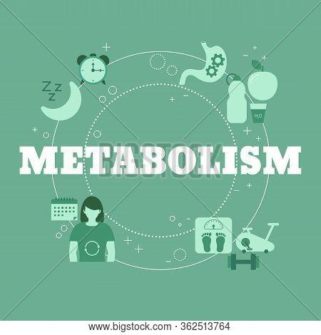 Metabolism Concept. Vector Illustration For Website, App, Banner, Etc.