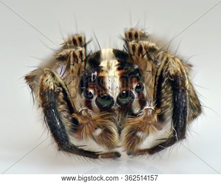 Spider Arthropod Weaving A Web Arthropod Weaving A Web