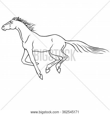 Horse Runs - Linear Vector Illustration For Coloring. Outline. A Horse Gallops - A Picture For A Col