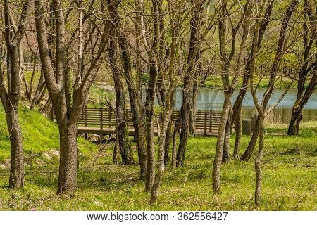 Footbridge And Small Pond Behind Grove Of Leafless Trees On Early Spring Day.