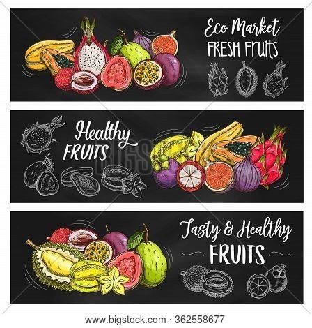 Tropical Fruits Farm Market, Vector Sketch Banners, Natural Organic Fruit Food. Exotic Papaya, Mango