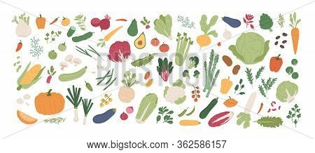 Collection Of Various Vegetables Isolated On White Background. Bundle Of Organic Natural Crops, Sala