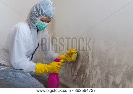 Worker Of Cleaning Service Removes The Mold Using Antimicrobial Spray And Sponge.