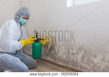 Female Worker Of Cleaning Service Removes The Mold Using Antimicrobial Spray