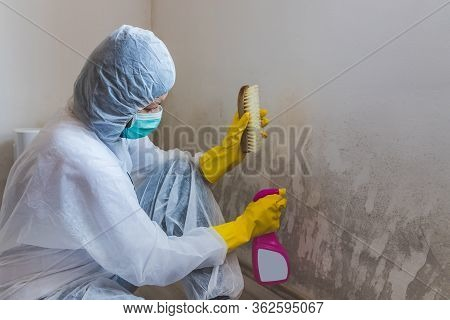 Worker Of Cleaning Service Removes The Mold Using Antimicrobial Spray And Scrubbing Brush.
