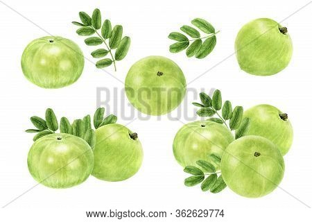 Closeup Indian Gooseberry Fruits Amla With Leaf Set Watercolor Illustration Isolated On White Backgr