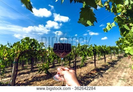 White Clouds Over Wineglass In Hand Of Farmer. Cheers At Sunny Vineyard Area. Scenic Landscape With