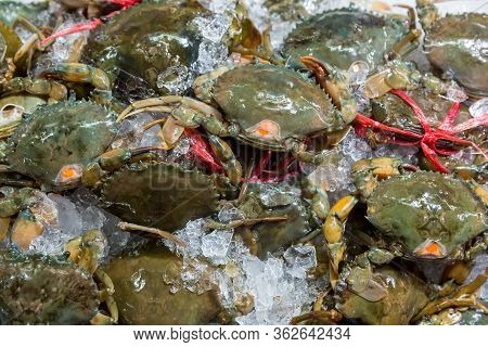 Fresh Crabs In Seafood Market. Arthropod Phylum. Armature And Claw Concept. Fresh Sea Crab That Are