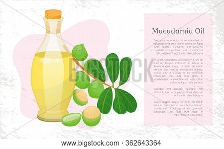Glass Bottle With Liquid Inside And Closed With Bung. Branch With Green Leaves And Maroochi Plant. S