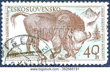 Czechoslovakia-circa 1959: Postage Stamp Printed In Czechoslovakia With The Image Of A Zubr, From Th