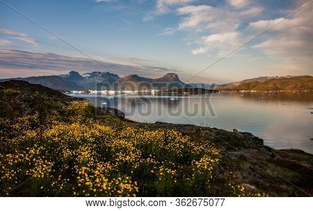 Summer Sunset Between Flowers And Icebergs In Narsaq, Greenland