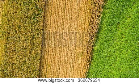 Aerial Top View Of A Different Agriculture Fields In Countryside On A Spring Day. Corn Farm. Corn Fi
