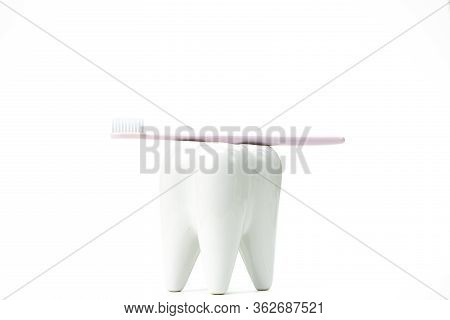 Toothbrush Stand Shaped Like Primary Molar Tooth With Toothbrush. Oral Hygiene Concept