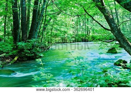 Nature Background. Green Trees, Water Creek Stone, Nature Background Foliage Leaves Waterfall. Woods
