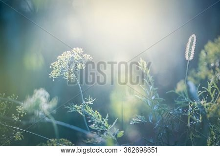 Nature Background. Spring Green Deciduous Trees Water Creek Stone. Nature Background Foliage Leaves