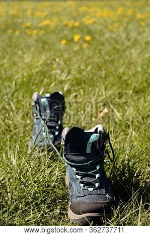 Hiking Shoes In Green Grass, And Yellow Flowers, Annecy, France