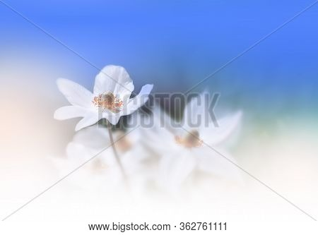 Beautiful Nature Background.Floral Art Design.Abstract Macro Photography.Colorful Flower.Pastel Flowers.Blue Background.Creative Artistic Wallpaper.Celebration,love.Close up View.Happy Holidays.Copy Space.Classic Blue Color of the Year.