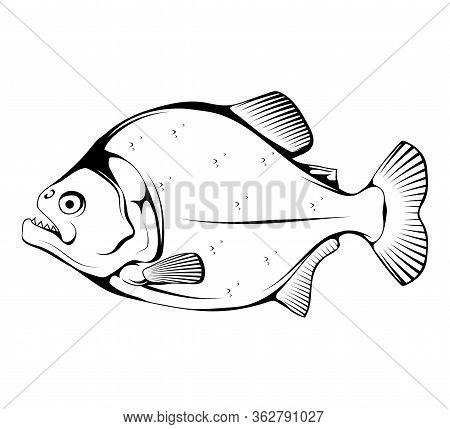 Sketch Piranha. Fish Piranha Mascot Logo. Hunter Predatory Fish. Piranha Fish Logo. Living In Rivers