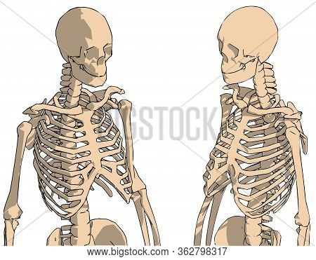 Hand Drawn Human Skeleton Drawing, Human Skeleton System With Back Lines