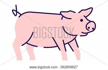 Cute Pig Side View Flat Vector Illustration. Livestock Farming, Domestic Animal Husbandry Design Ele