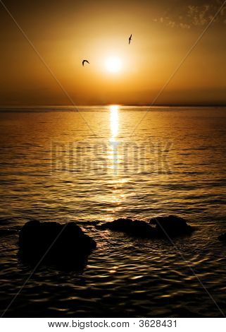 spirit of freedom - two seagulls flying towards sunset poster