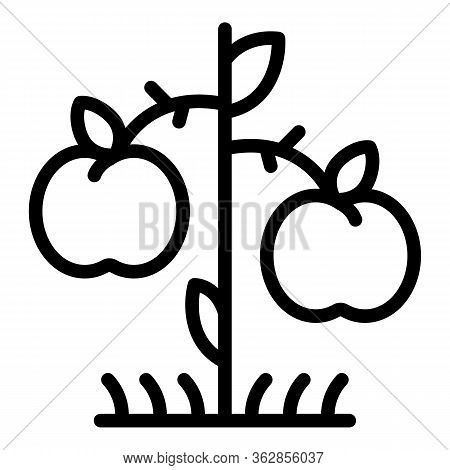 Apple Tree Producer Icon. Outline Apple Tree Producer Vector Icon For Web Design Isolated On White B
