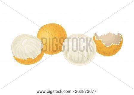 Longan Fruit Of Circular Shape Showing Translucent Flesh Vector Illustration