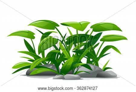 Plants With Green Leaves Grow Around Stones In Landscape Design, Detailed Jungle Plants On Ground Is
