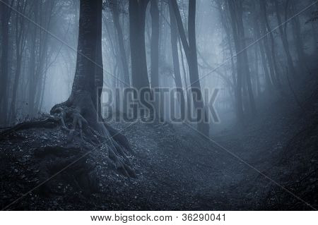 Dark blue fog in a mysterious forest