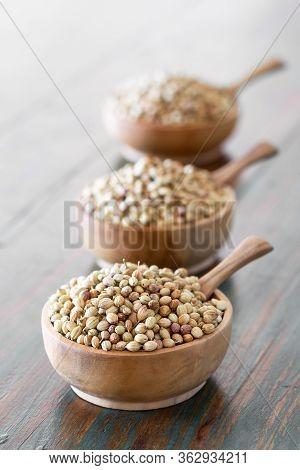 Organic Dried Coriander Seeds (coriandrum Sativum) In Wooden Bowls On Rustic Background. Healthy Eat