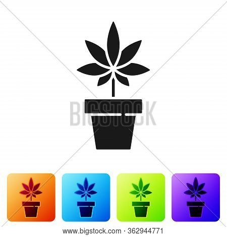 Black Medical Marijuana Or Cannabis Plant In Pot Icon Isolated On White Background. Marijuana Growin