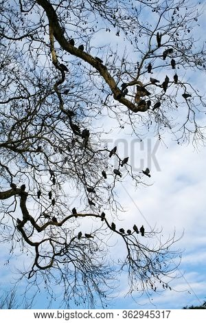 close up large tree branches and group of pigeons over sky