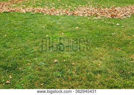 close up green grass landscape and fallen autumn leaves