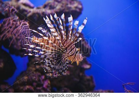 Exotic Fish Of