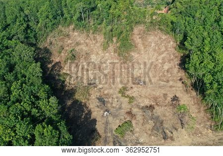 Deforestation. Rainforest is cleared for palm oil industry.