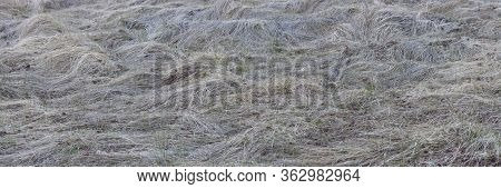 Panoramic Shot Of A Field Of Wind-blown Grass