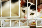 bored and sad kitty lock up in a cage poster