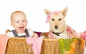Mischievous happy young baby and dog with a guilty expression sitting in the laundry basket covered in washing poster