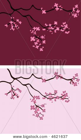 Cherry Blossom Backgrounds - Vector Illustration