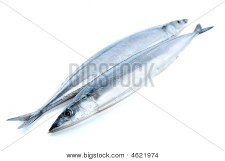 Two fresh pacific saucy fishes isolated on the white background poster
